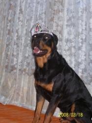 Царя на кучетата!  :D