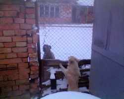Бела се кара с комшийското куче