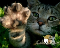 CatsGroove-Wallpapers-0704.jpg