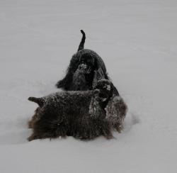 Много обичаме този сняг!