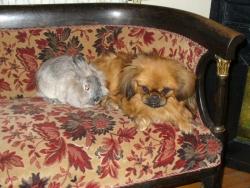 Зая и Лекси