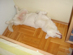 Рекс спи