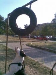 Плезим се на гумата