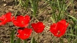На Великден