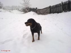 Осъмнахме в сняг
