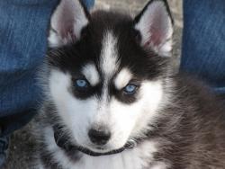 Айра с сините очички :)