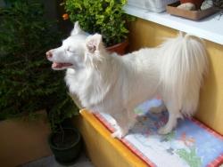 Тиса добива тен на балкона ;)