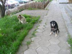 Джина и Лиза-другите ми две душички :)