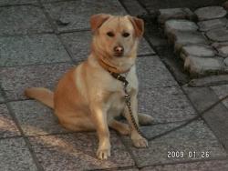 Моето кученце!.JPG
