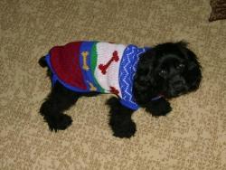 първият пуловер