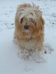 tt snow help.jpg