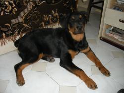 Тара вече на 5 месеца :)
