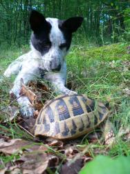 Бу и костенурката