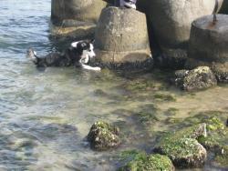 Сандра във водата