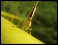 Една пеперуда :)