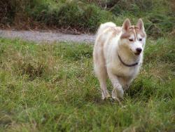 Run, Forest, run