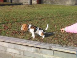 Дина на разходка в парка. Колко е щастлив този момент!