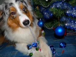 Искам си подаръка или всичко ще изям............