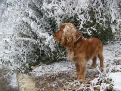 Снежна красота :)