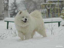 Снежни игри