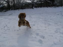 Скок!