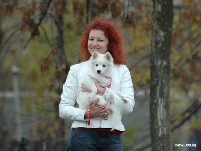 Сезон с цвят на куче
