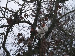 Кацнал на едно дърво!