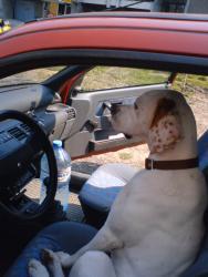 Джеси кара кола