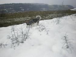 Збогуване с последния сняг
