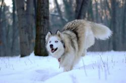 Последен зимен ден_1