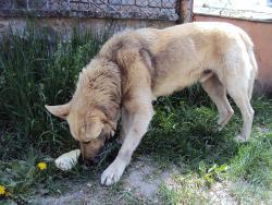 Куче без дом