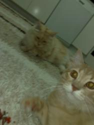 Джоши и  Миша