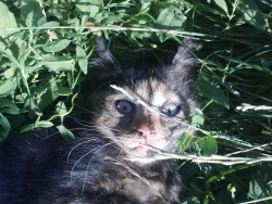 Изенадано коте