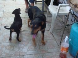 Берта и Роко и малкия Боби....