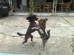 танго за двама