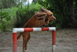 Скок :)