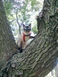 за първи път на  дърво