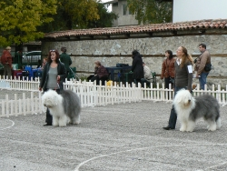 Bansko dog show 15.10.2010