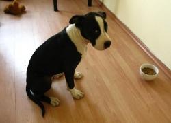 Jazzy на 3.5 месеца