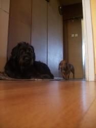 Нора и Бибри
