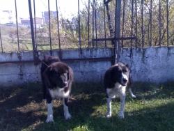 Karaman i Indira