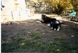 Indira i Tosho