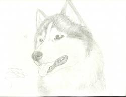 dog20011.jpg