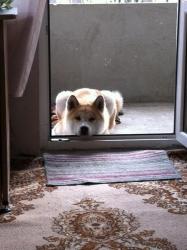 Кенши чака кюфтенце :)