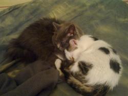 Кира и Томас