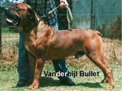 Vanderbijl Bullet.jpg