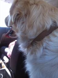 Обича да се вози в колата