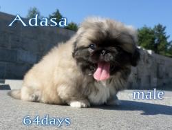аз съм  Адаса и съм на 64 дни