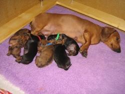 10_puppies.jpg