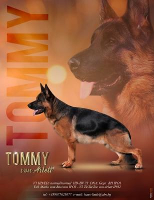Tommy v. Arlett